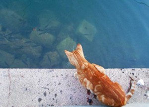 This cat was twitching with eagerness to get to the fish.